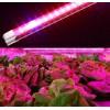 Фитосветильники для роста растений